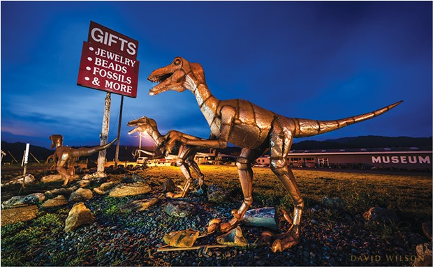 A marauding pack of velociraptors outside of Chapman's Gem and Mineral Shop south of Fortuna, Humboldt County, California. Photo from March 6, 2020.