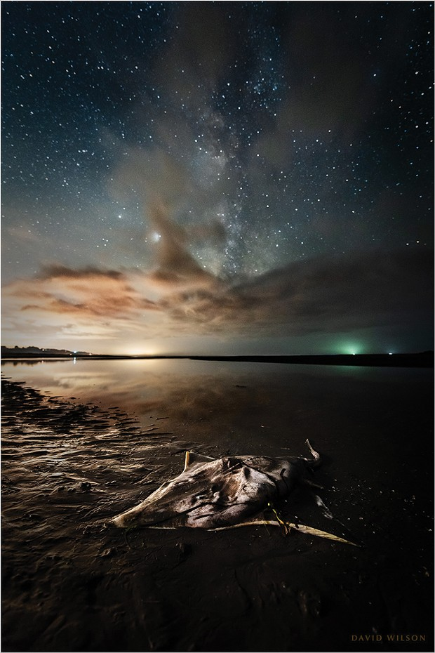 The lifeless skate lay on the shore with its tail still in the water. Above, the Milky Way, with Jupiter and Saturn, marked its passage in a night-long vigil.