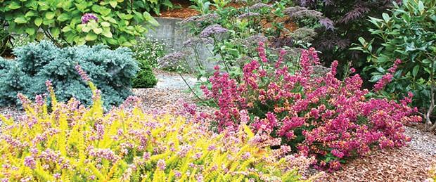 garden-magnum.jpg
