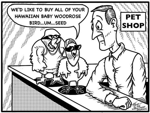 Seed Run