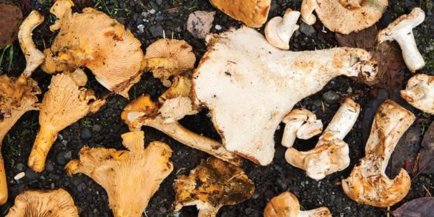 mushroom-magnum.jpg
