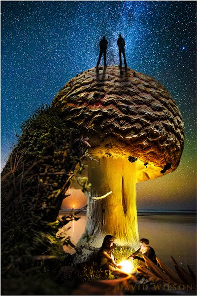 2018-11-10_bill-david-moon-milkyway_10-amanita_1500px.jpg