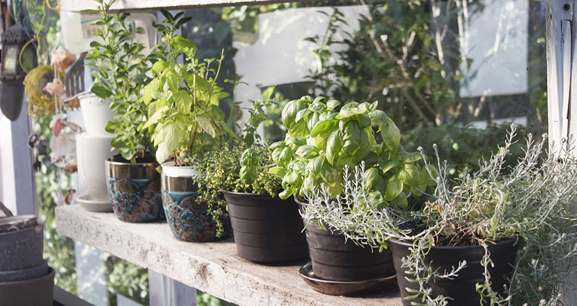 Micro Farming A Kitchen Herb Or Succulent Garden Down And Dirty North Coast Journal