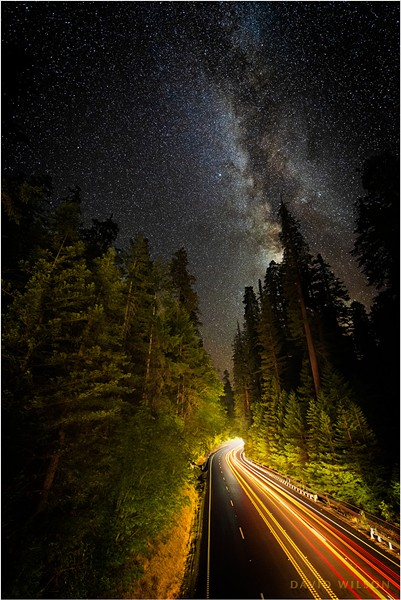 Late night cars paint their strokes of light onto the dark canvas along a redwood corridor on US 101, the Redwood Highway. Photographed from the Avenue of the Giants, Humboldt County, California. - DAVID WILSON