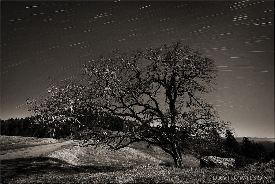 A moonlit oak tree watches the passage of the stars on their nightly journey across the sky near a country road in Humboldt County, California. March 2019. - DAVID WILSON