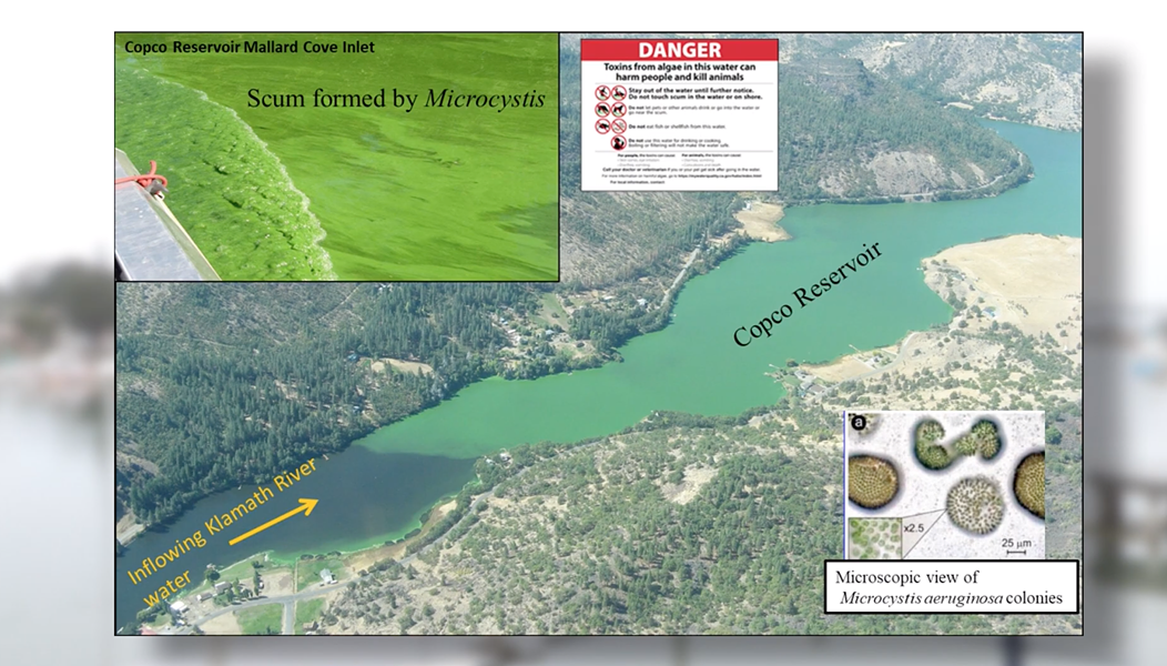 A slide shows the buildup of toxic blue-green algae on the Klamath River in Copco reservoir behind the Copco dams. - SCREENSHOT FROM KEET'S LIVE BROADCAST