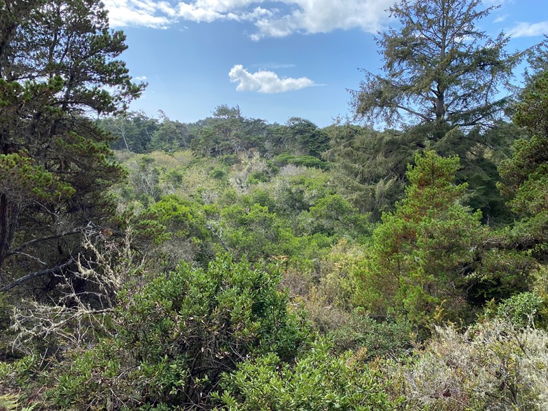 The Dog Ranch's ecologically significant coastal forest. - SUBMITTED