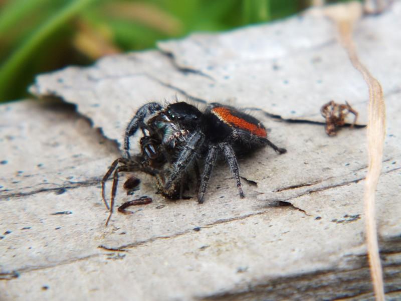 Spider-on-spider violence.