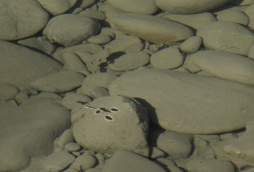 The strider's shadow on the rocks below. - ANTHONY WESTKAMPER