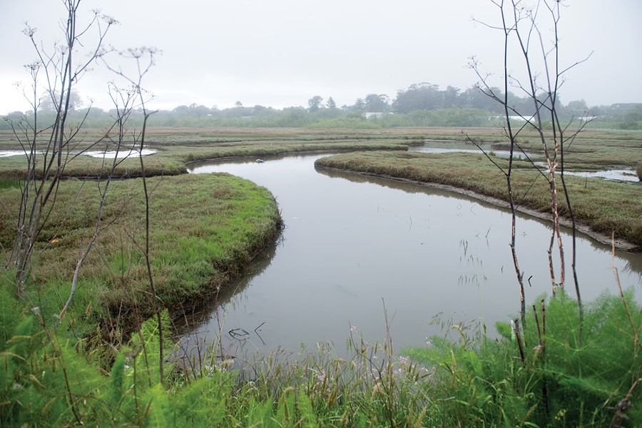 The recently restored PalCo Marsh. - MARK MCKENNA