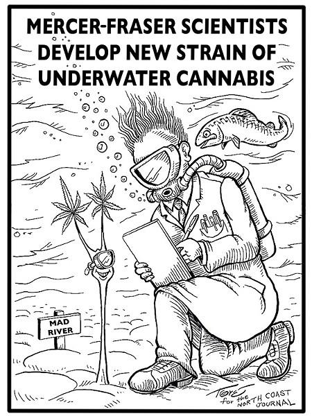 Mercer-Fraser scientists develop new strain of underwater cannabis. - TERRY TORGERSON