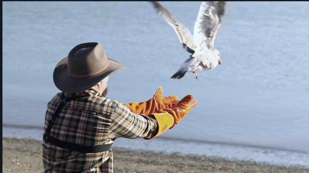 Griffith releases an injured gull back into the wild. - VIA ANIMALPLANET.COM