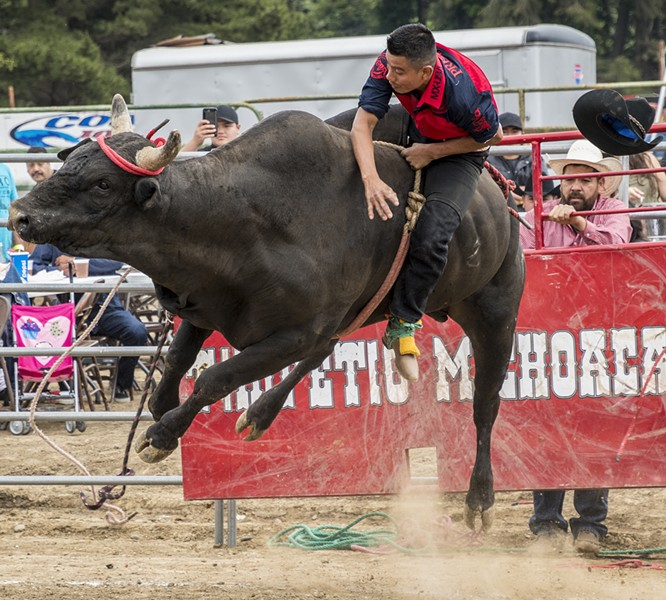 A bull rider fights to hold on at Redwood Acres Fairgrounds. - PHOTO BY MARK LARSON