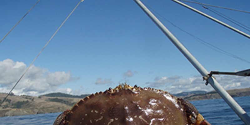 Commercial Dungeness crab season to open Dec. 23.