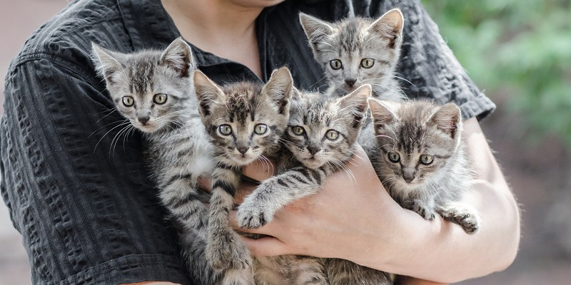 A proposed animal ordinance in Eureka would require cat owners with more than four to get a fancier's license while dog owners would need to do the same with four or more dogs and reptile owners with more than 10.