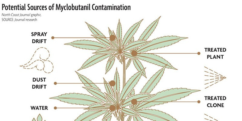 This first place CNPA award winner for Informational Graphic went with a story on cannabis contamination.