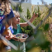 The Jefferson Community Center is Turning Up the Heat' A child at the Friday morning garden harvest proudly showcases a freshly harvested snap pea. Katie Rodriguez