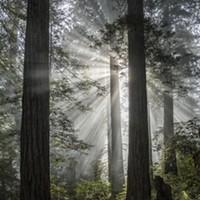 A Humboldt Hike  Worth the Drive