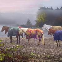 Fog frames horses standing along Mitchell Road off of Myrtle Avenue in Eureka.