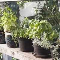 Micro-farming a Kitchen Herb or Succulent Garden