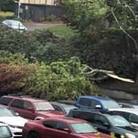A downed tree at Humboldt State University covered at least two cars.