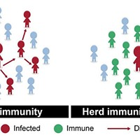 Herd immunity is achieved when immunity reaches a high-enough percentage to stem the spread of a disease.