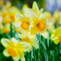 Garden-y Things Happening This Week