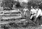 Myrtle Grove Cemetery 1952, Grand Army of the Republic section. From left: Eric Quist, unidentified, Earl Johnson, and C. E. Tabor.