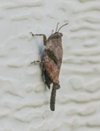 A 1/2-inch grouse locust on my garage door.