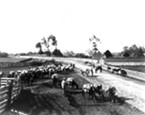 Brizard mule train at Alliance Corners. The mules were loaded in Arcata, then a first stop was made at Alliance Corners to readjust the packs.