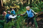 (Left to right) Gary Friedrichsen, John Sullivan, George Nickerson and Orleen Smukler pass limbs down the slope to mix in with replanted ferns.