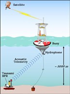 A graphic showing the buoy system that tracks tsunamis.