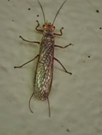 Giant Stonefly on side or public restroom at rest stop.