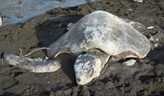 Sea Turtle Lovin'