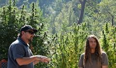 Cannabis Collaboration Can Set Us Apart
