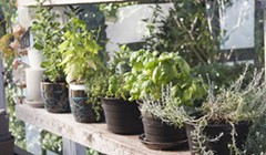 Micro-farming a Kitchen Herb or Succulent Garden