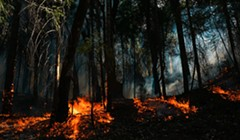 'Fire Conditions Have Worsened': Spot Fires on 36