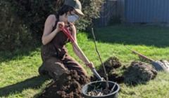 Cooperation Humboldt Plants Fruit Trees for Everyone