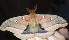 Moth Madness