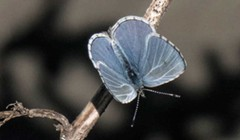 Killer Fungus and the Return of Butterflies