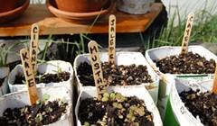 Victory Gardening
