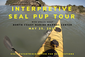 Interpretive Seal Pup Tour w/ Northcoast Marine Mammal Center