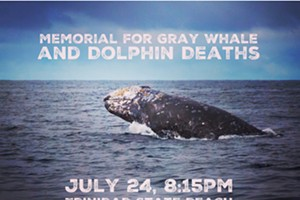 Memorial for Whale and Dolphin Deaths