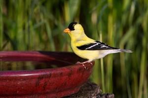 Redwood Region Audubon Society Bird-Friendly Yards Tour