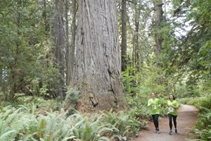 Virtual Run in the Redwoods 5k Fun Run/Walk