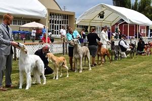 Lost Coast Kennel Club Dog Shows