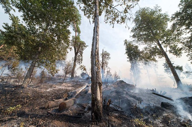 Damp Weather Slows Fires with Drier, Windier Weekend Forecast