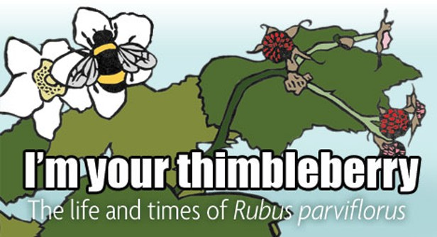 I'm your thimbleberry: The life and times of Rubus parviflorus