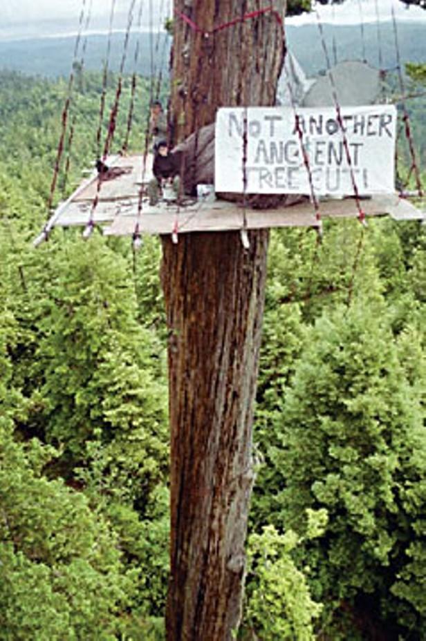 What Now, Treesitter?