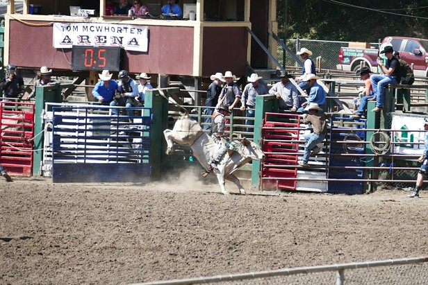 Rodeo 2015
